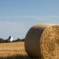 Høst 11.jpg