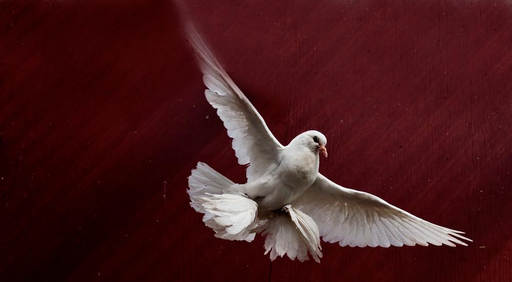 Ti facts om tiende afsnit af 'Herrens Veje'