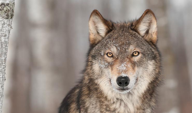 ulv i fåreklæder folkekirken